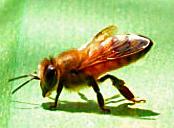 1-bee boy2