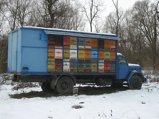 A truckload of beehives